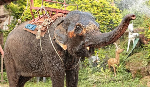 Elephant Crying After Being Freed